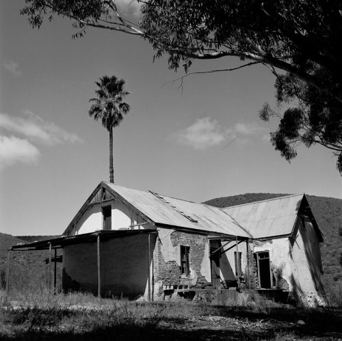Abandoned House with Palm Tree